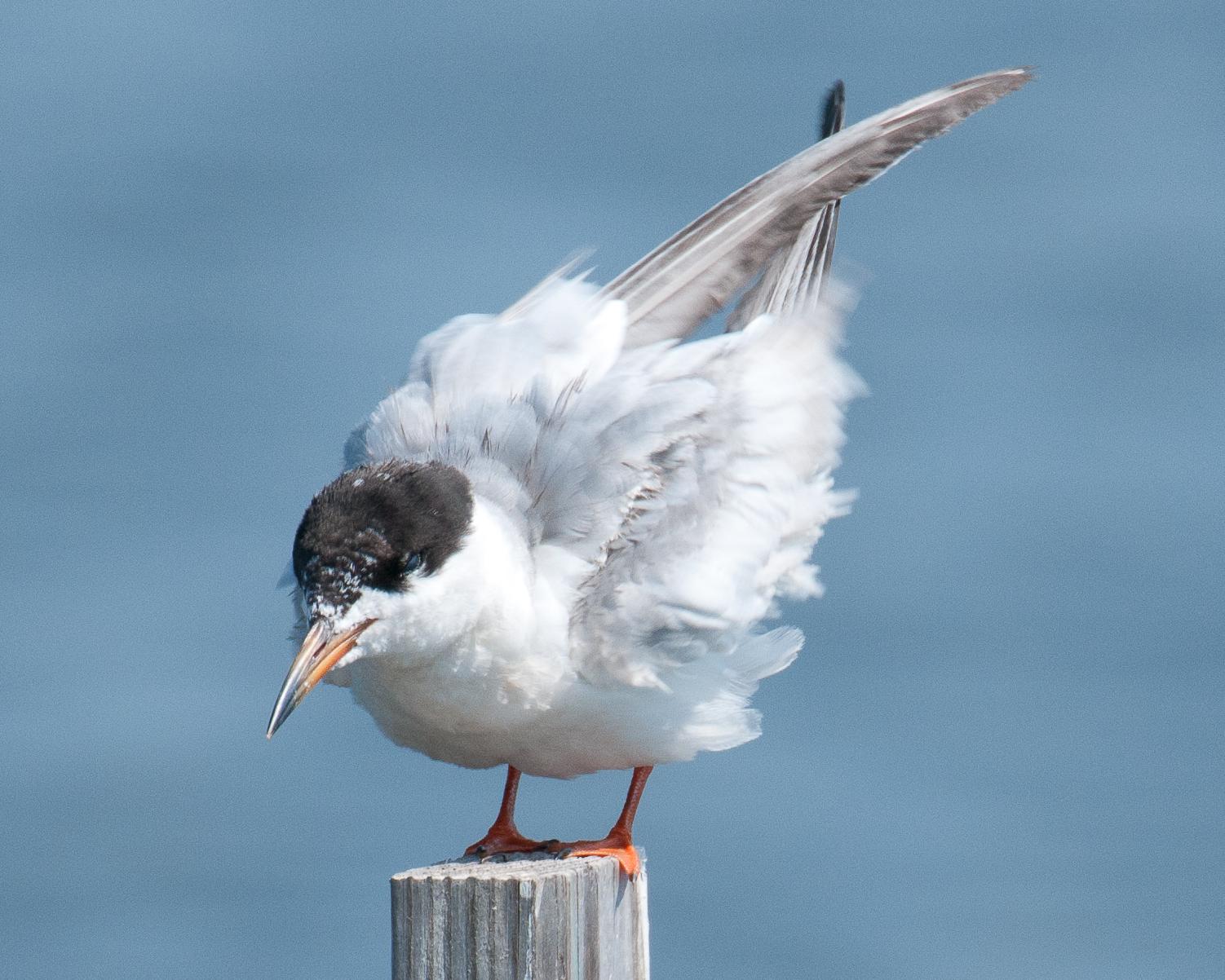 One tern ...