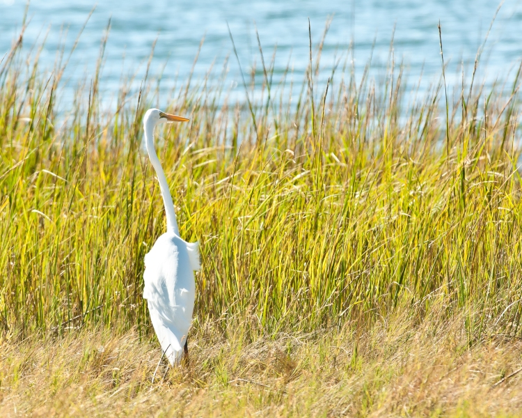 Marshlands Photo Exhibit Oct 2012-7