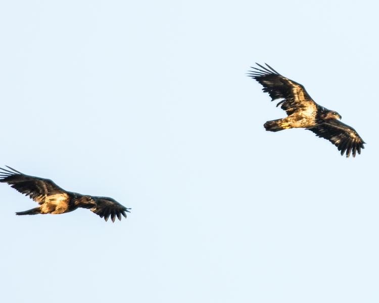 Croton eagles 010713-2