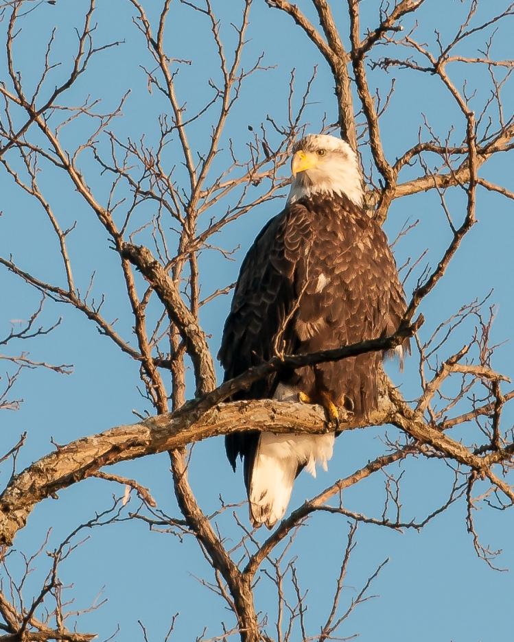 Croton eagles 010813-1