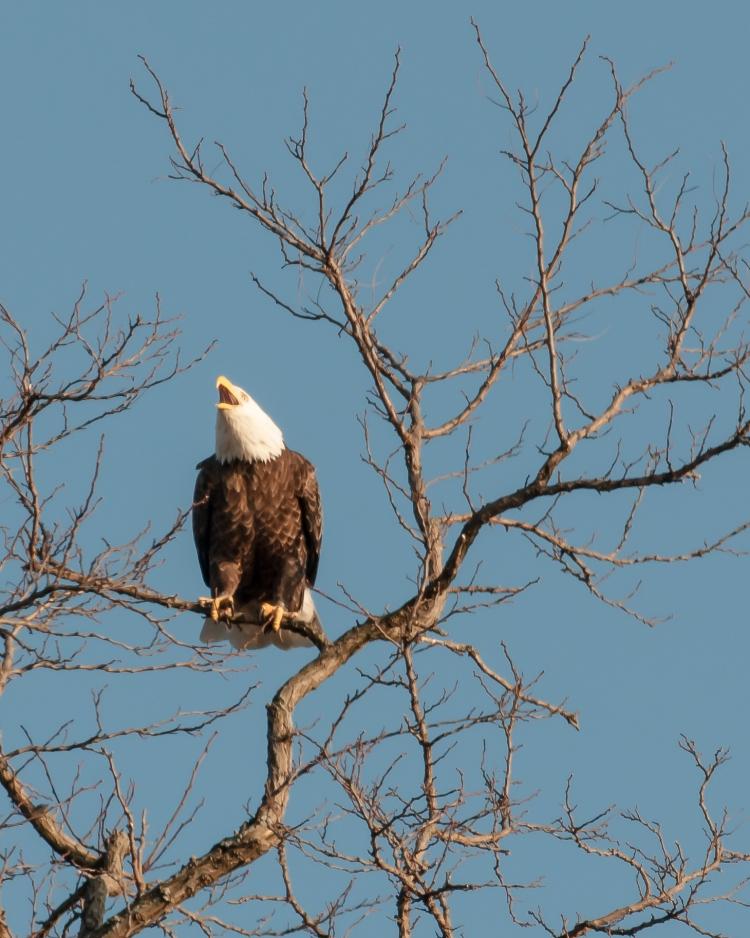 Croton eagles 010813-2