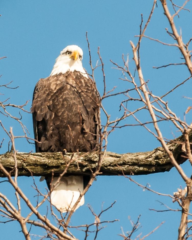 Croton eagles 010813-3