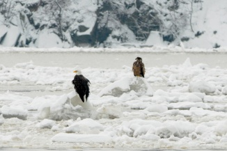 Eagles on the Hudson two years ago when we had ice