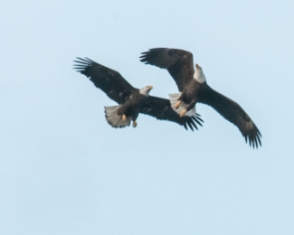 Eagles Feb 2013-5