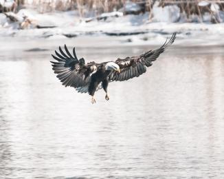 Hudson River EagleFest 2013-1