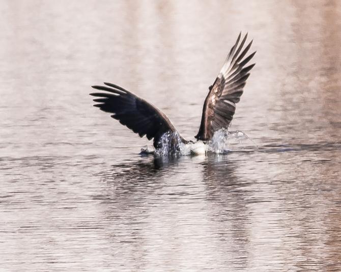 Hudson River EagleFest 2013-2