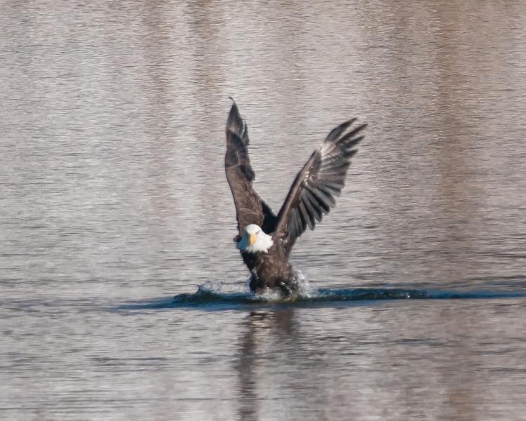 Hudson River EagleFest 2013-4