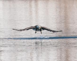 Hudson River EagleFest 2013-5