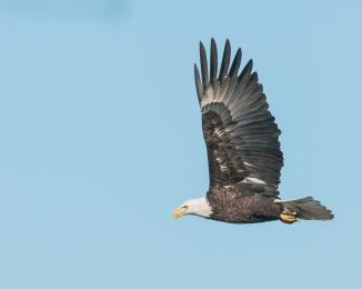Hudson River EagleFest 2013-7