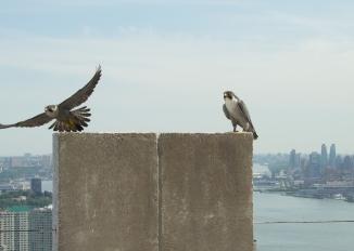 Jersey City Banding 2013-5
