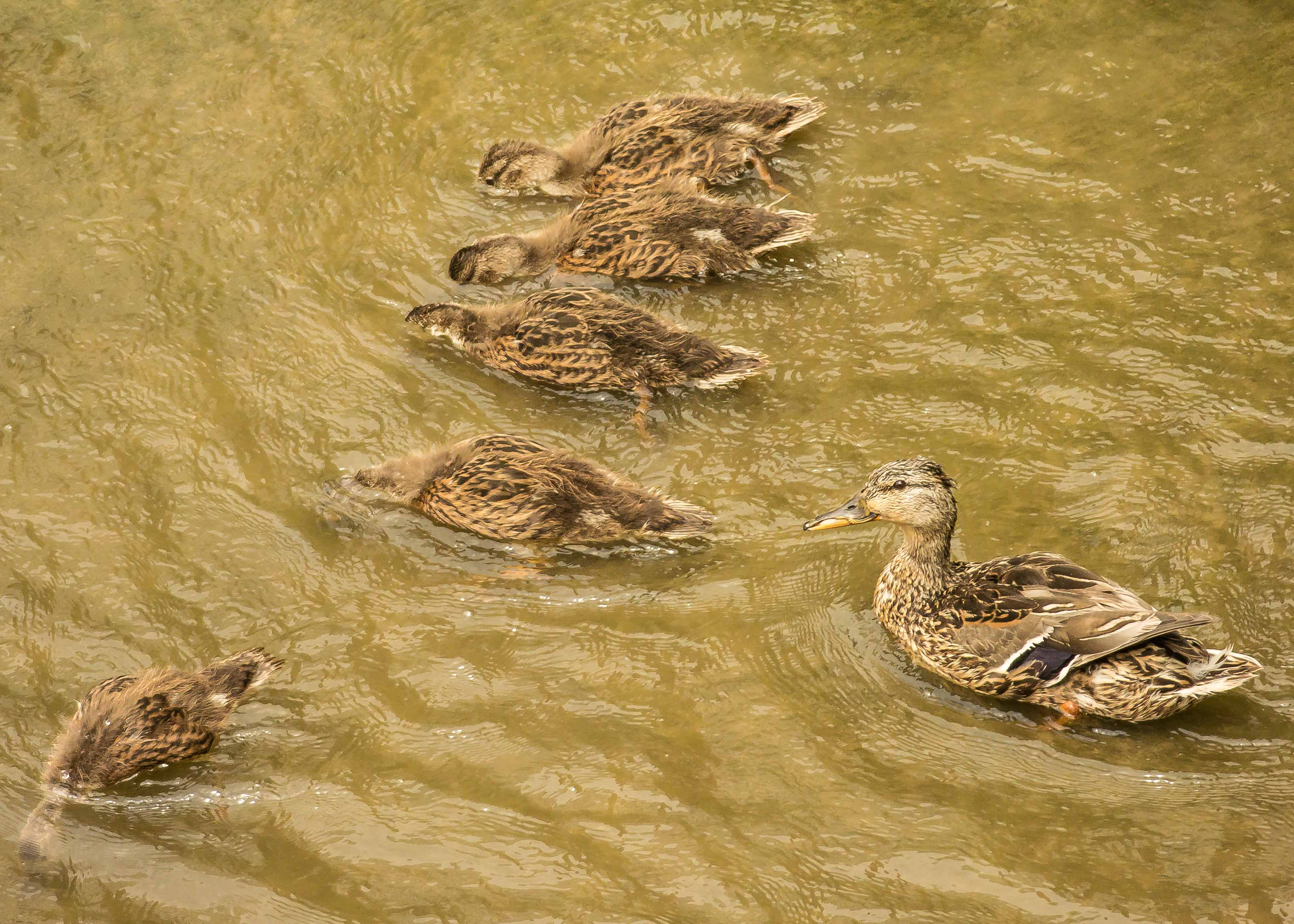 This is how you get all your ducks in a row.