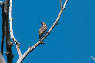 Flicker at Croton