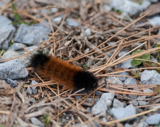 Caterpillar on Croton Meadow