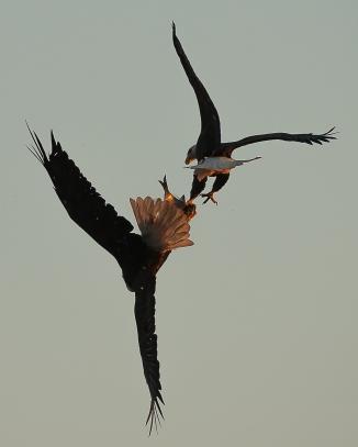 Conowingo Eagles Oct 2013-9