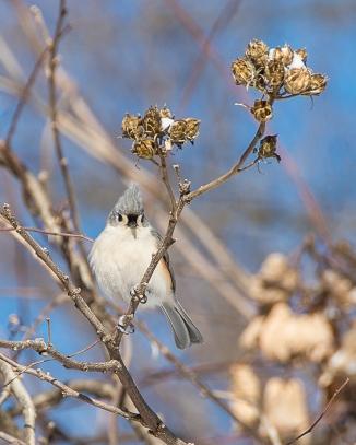 Backyard Birds Snow 2014-1