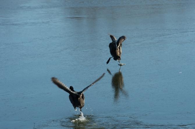 Coots Ice Skating Croton Jan 2014-3