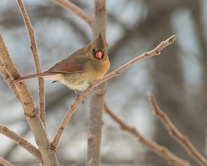 Cardinal 2014