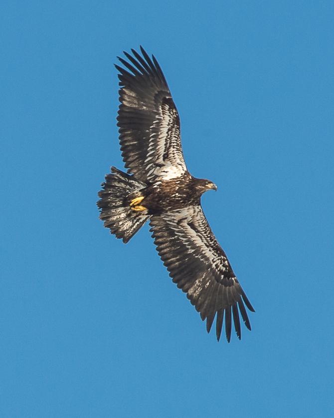 Eagles Brookside Feb 11 2014-1