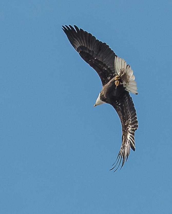 Eagles Feb 2014-4