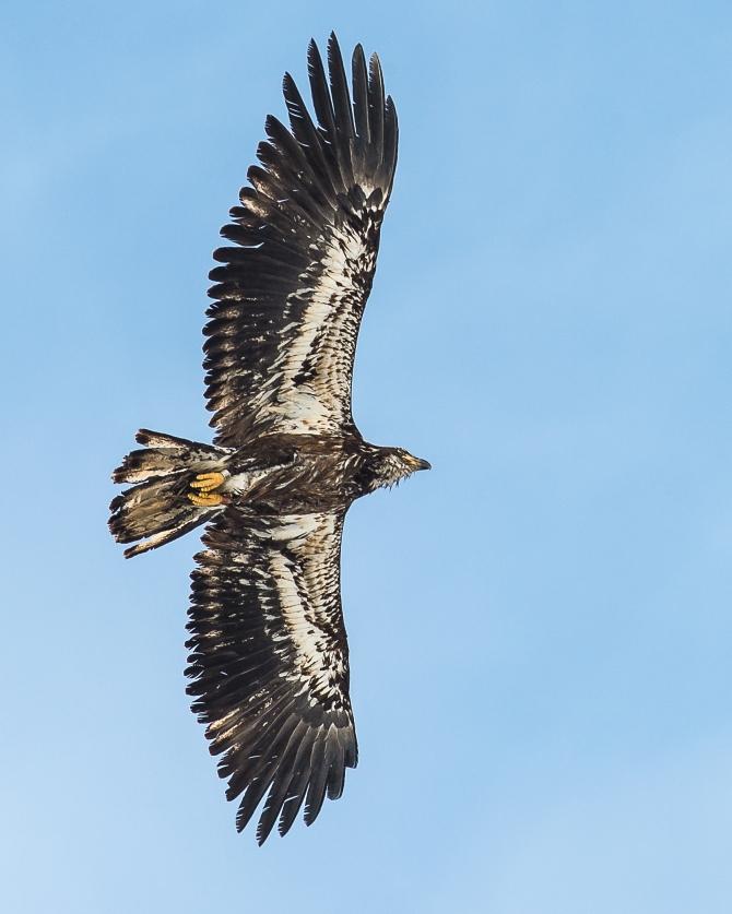 Eagles Feb 2014-5