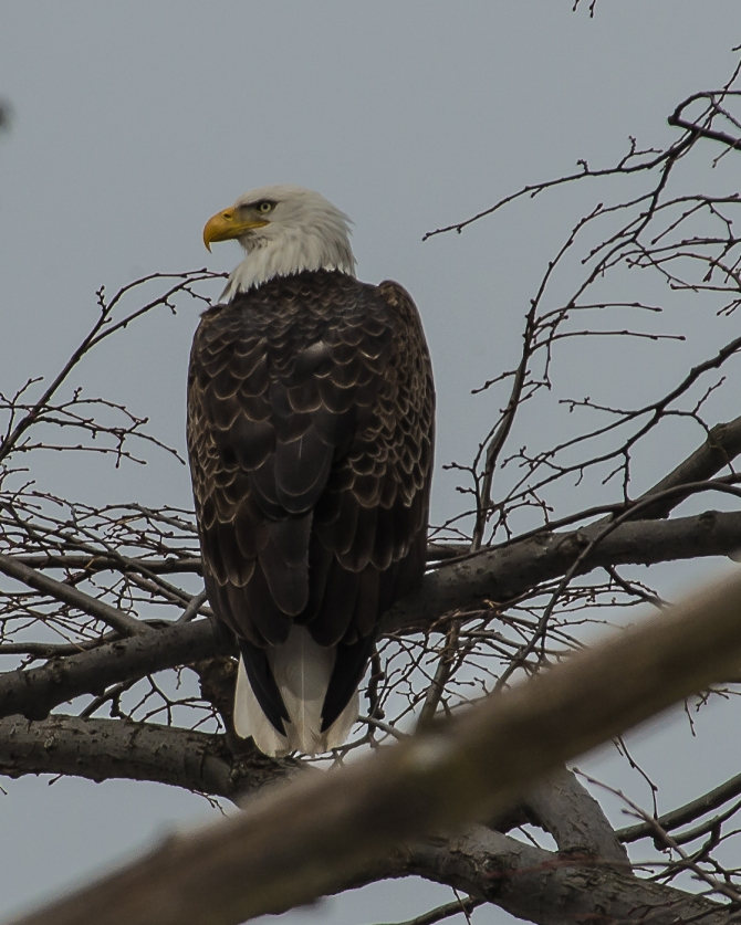 My friend at the Croton Nature Center today.  He likes this tree.