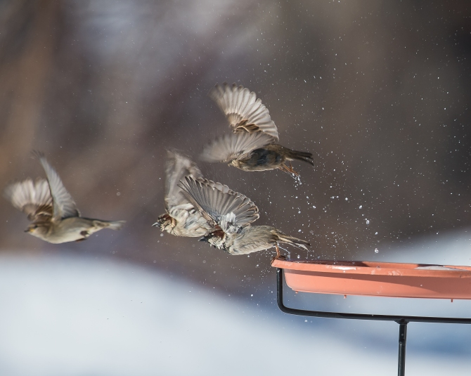 Solid proof that the birds will use our new birdbath.  The ice thawed enough a couple of days ago.