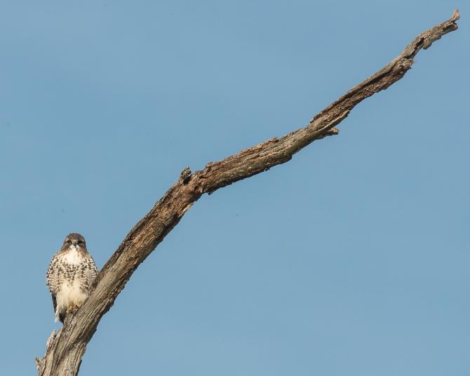 Winter wildlife Feb 2014-1