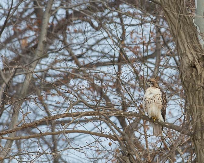 Winter wildlife Feb 2014-3