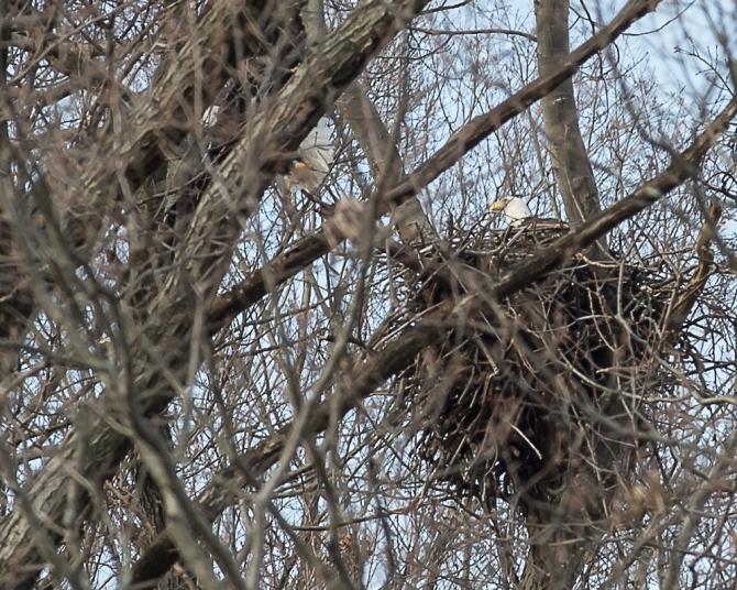 Winter wildlife Feb 2014-8
