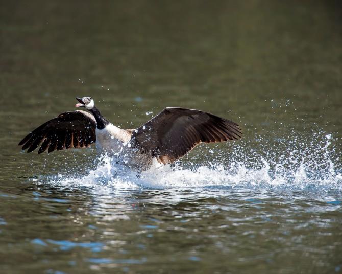 Love those geese