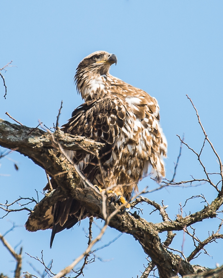 Do I look like an eagle?