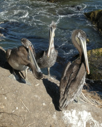As long as I am talking about pelicans - Pismo Beach a few years ago