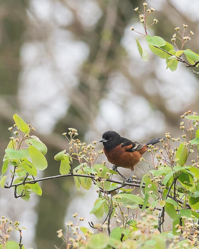 Spring at Croton-4