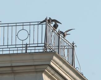 Rochester falcons 2014-21