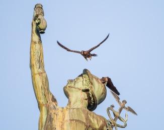 Rochester falcons 2014-39