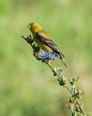 Muscoot Farm Bird Walk 8-4-14-1