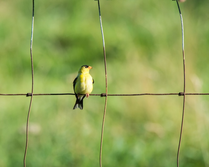 Muscoot Farm Bird Walk 8-4-14-2