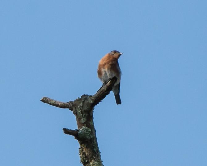 Muscoot Farm Bird Walk 8-4-14-4