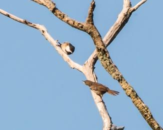 Rockefeller Bird Walk 8-11-14-1