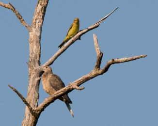 Rockefeller Bird Walk 8-11-14-2