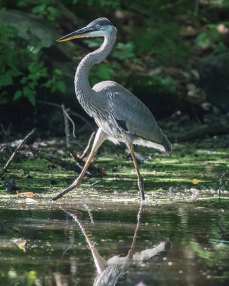 Rockefeller Bird Walk 8-11-14-4