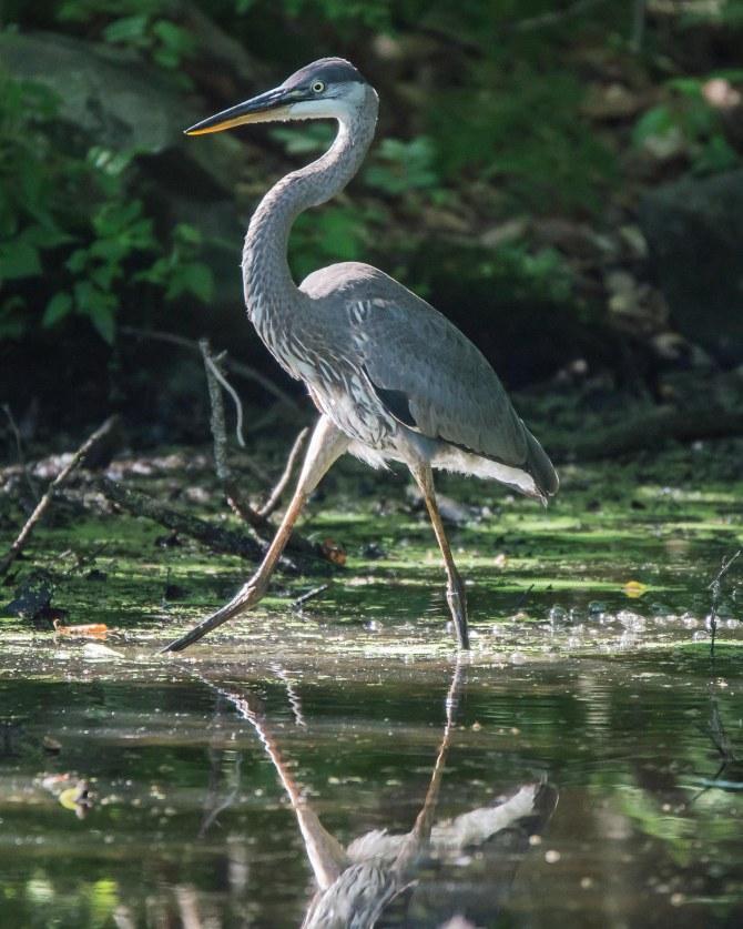 Rockefeller Bird Walk 8-11-14-4