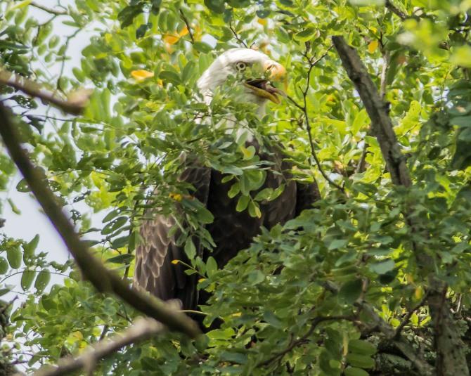 Eagle Friend Visited