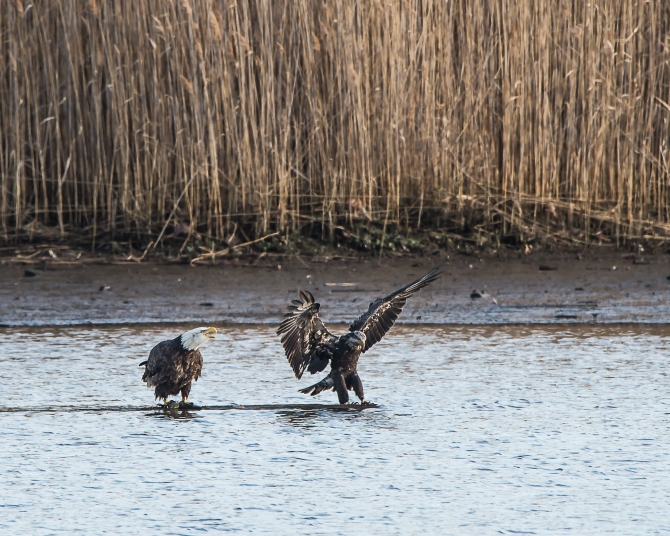 Eagles Fishing Dec 2014-1