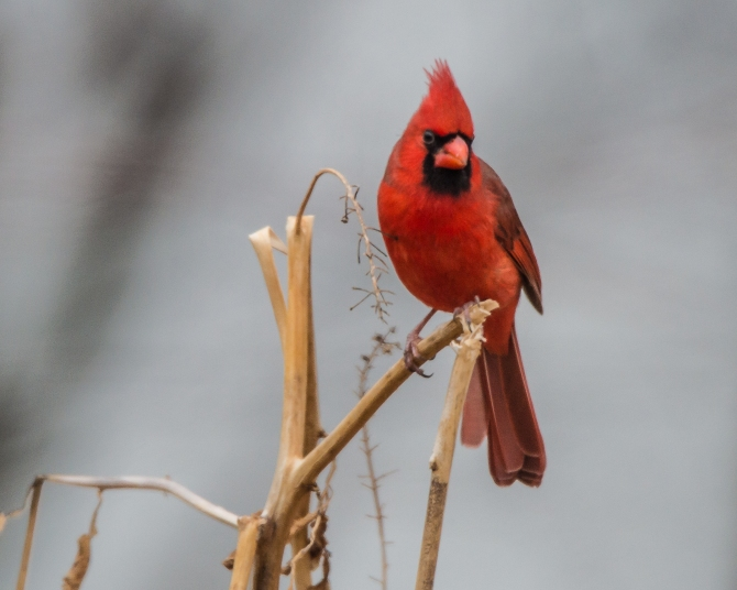Croton and Feederwatch Dec 14 2014-1