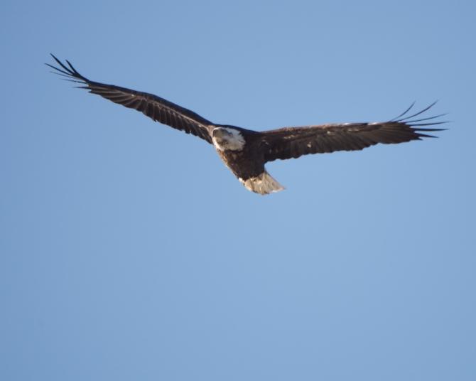 Eagle Verplanck 1-17-15-1