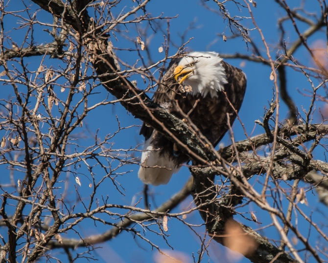 Eagle Verplanck 1-17-15-3