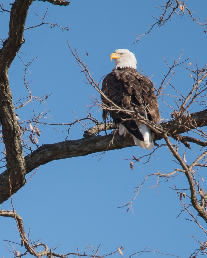 Eagle Verplanck 1-17-15-5