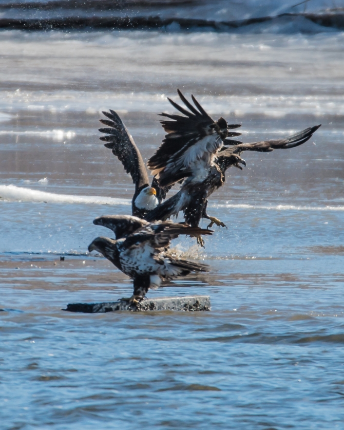 Eagles First Grade EagleWatch 1-28-15-3