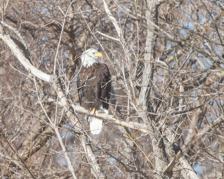 Eagles First Grade EagleWatch 1-28-15-5
